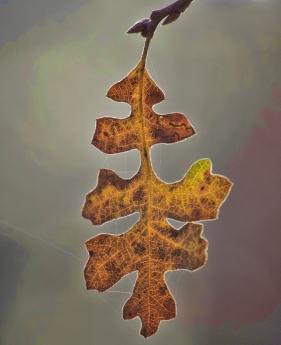 autumn-fall-leaf-772936